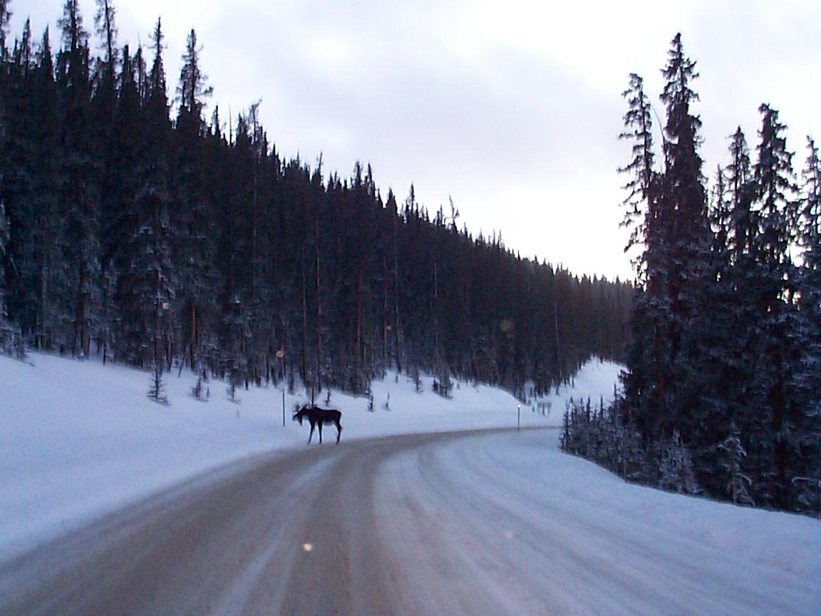 New Year's Day traffic, Slumgullion Summit Hwy 149